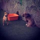 Preço de creche para cachorros no Jabaquara