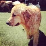 Preço de creche para cão no Pacaembu