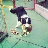 Preço de creches de cachorro no Jockey Club