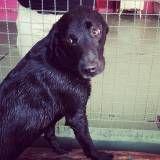 Preço de creches de cães no Socorro