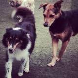 Preço de creches de cão  no Brooklin