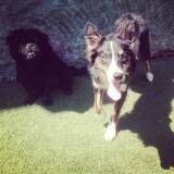 Preço de creches para cachorros no Alto da Lapa