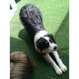 Preço de Daycare de cachorros no Jardim Paulistano
