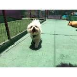 Preço de Daycare para cães na Lapa