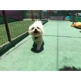 Preço de Daycare para cães no Ibirapuera