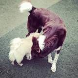 Preço de Daycare para cão  em Osasco