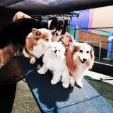 Preço de hospedagem de animais no Sacomã