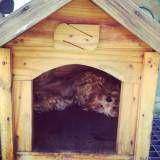 Preço de hospedagem para animais em Osasco