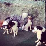 Preço de hospedagens de animal  no Jardim Bonfiglioli