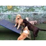 Preço de hospedagens para animais no Campo Belo