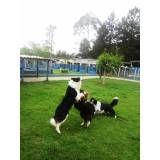 Preço de hotéis de cães em Interlagos
