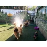 Preço de hotéis para animais no Jabaquara