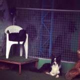 Preço de hotéis para animal no Morumbi