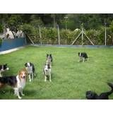 Preço de hotéis para cachorros na Cidade Jardim