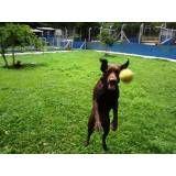Preço de hotéis para cães no Ibirapuera