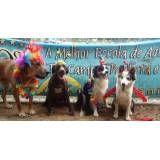 Preço de hotéis para cão no Pacaembu