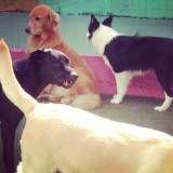 Preço de hoteizinhos de cachorro  no Sacomã