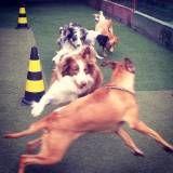 Preço de hoteizinhos de cachorros  no Jardim América
