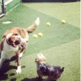 Preço de hoteizinhos de cão no Jardim América