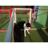 Preço de hoteizinhos para cachorro  no Jardim São Luiz