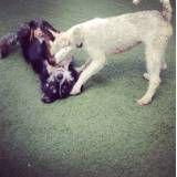 Preço de hoteizinhos para cachorros  em Cotia