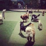Preço de hoteizinhos para cães  no Rio Pequeno