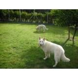 Preço de hotel de cachorros em Moema