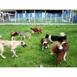 Preço de hotel de cães no Jockey Club