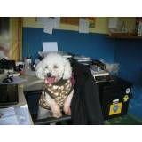 Preço de hotel de cão no Brooklin