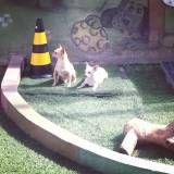 Preço de hotel para animal em Raposo Tavares