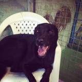 Preço de hotel para animal no Ipiranga