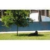 Preço de hotel para cães em Carapicuíba