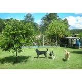 Preço de hotel para cão no Jaguaré