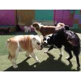 Preço de hotelzinho de cão  no Itaim Bibi