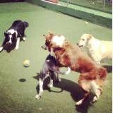 Preço de hotelzinho para cães no Campo Limpo