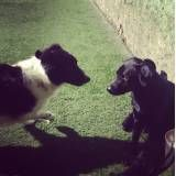 Preço de hotelzinho para cão  em Raposo Tavares