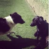 Preço de hotelzinho para cão  no Jardim Bonfiglioli