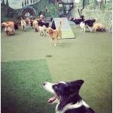 Preços de adestrador para cachorro em Itapecerica da Serra