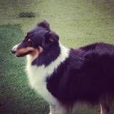 Preços de adestrador para cachorro no Pacaembu