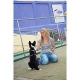 Preços de adestrador para cachorro no Rio Pequeno