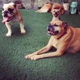 Preços de adestrador para cachorros na Cidade Ademar