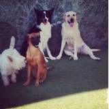 Preços de adestrador para cachorros no Jardim Paulista