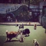 Preços de adestrador para cães em Perdizes
