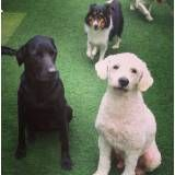Preços de adestrador para cão em Perdizes