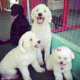 Preços de adestrador para cão no Jardim Europa