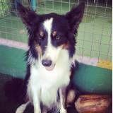 Preços de adestradores de cachorro no Butantã