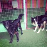 Preços de adestradores para cachorro em Itapecerica da Serra