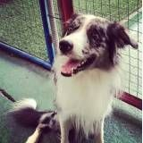 Preços de adestradores para cachorro no Jockey Club