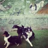 Preços de adestradores para cães em Embu Guaçú