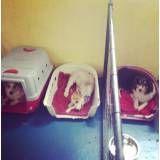 Preços de adestradores para cães no Ibirapuera